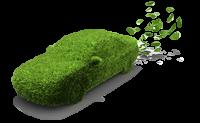 Dísznövény Járat kép