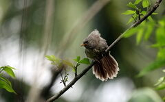 Blog madár kép