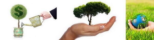 Ajándék dísznövények kép